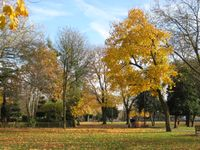 Wanstead - Nov08 (7)